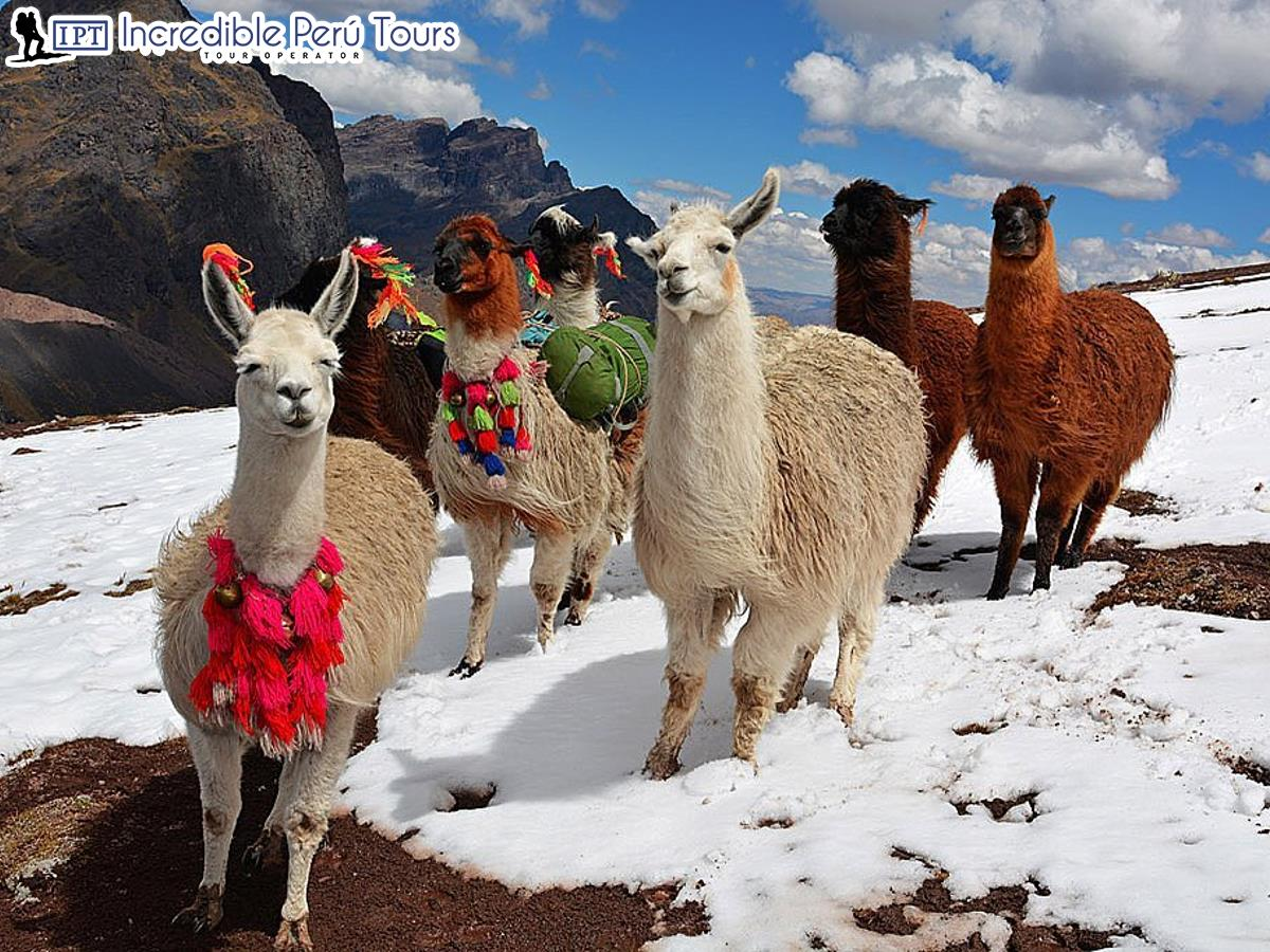 Salkantay to Macchu Picchu 4 Days 3 Nights 18